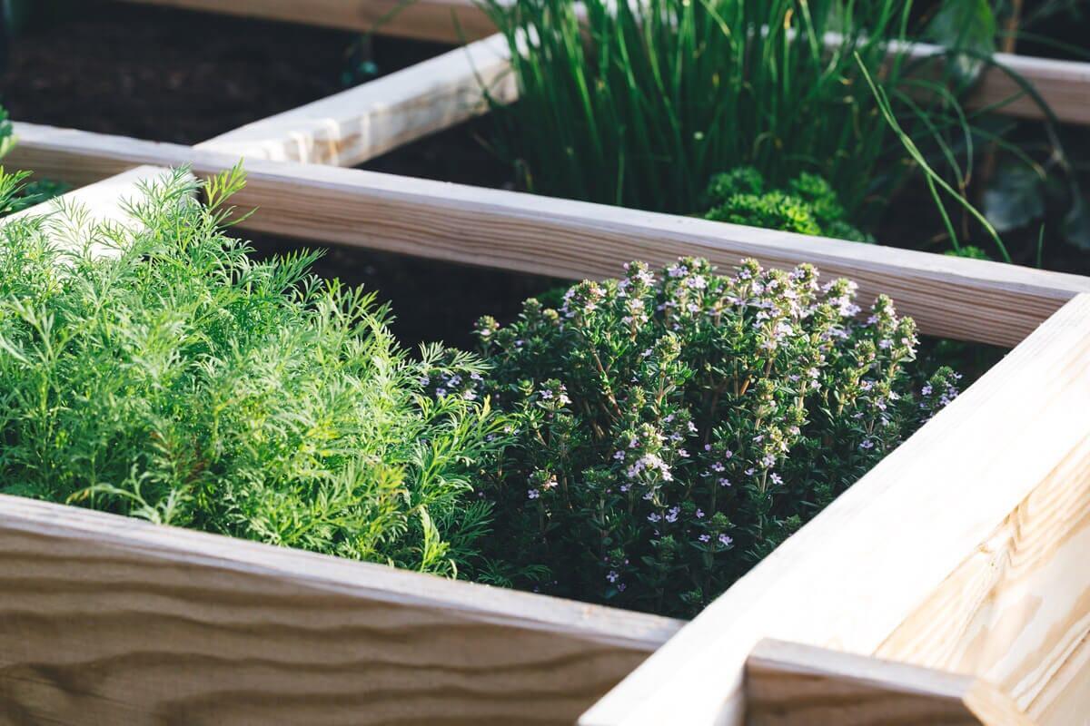 Raised Flower Beds Garden Boxes De Grizzly S Landscape Supply